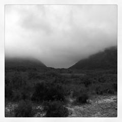 Fog on great meadow