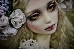 ~ Dead Flowers