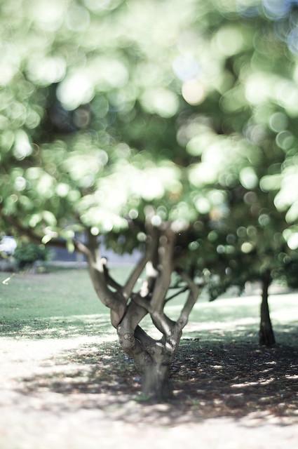 Bokeh Tree