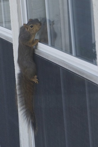 09.30.2011 Peeping Tom