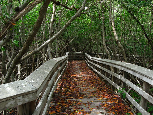 Everglades West Lake Trail