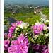 "upload-DSCN3484 • <a style=""font-size:0.8em;"" href=""http://www.flickr.com/photos/8038254@N06/6203959476/"" target=""_blank"">View on Flickr</a>"