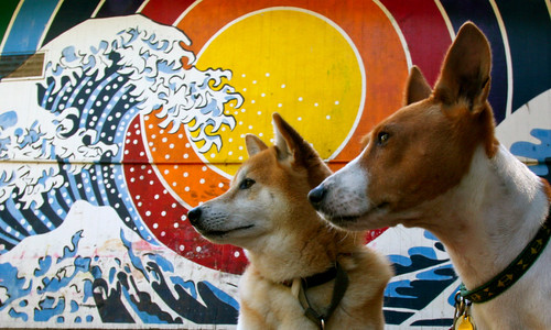 Two awesome dogs
