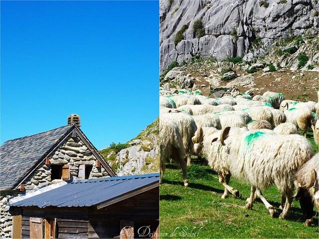 Estive dans les Pyrénées