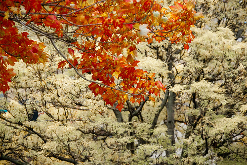 Change of the Seasons, Toronto by Julienne Pascoe