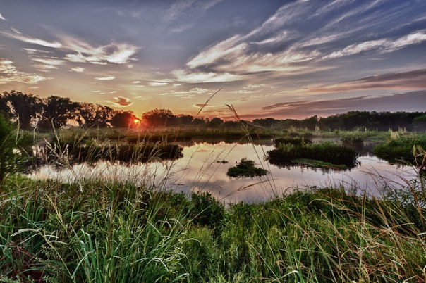 Sunrise marsh
