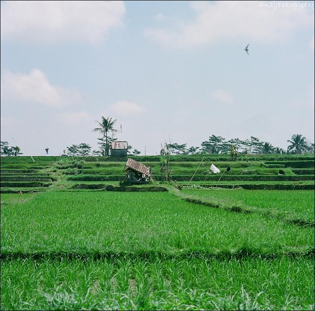 Ubud area