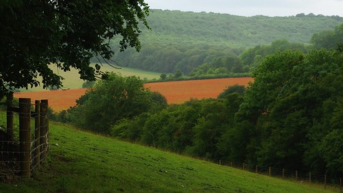 20110717-31_Distant Poppy Field - Chiltern Hills by gary.hadden