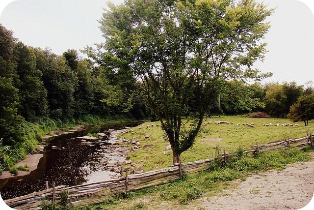 Bergerie de l'Acadie - Les moutons