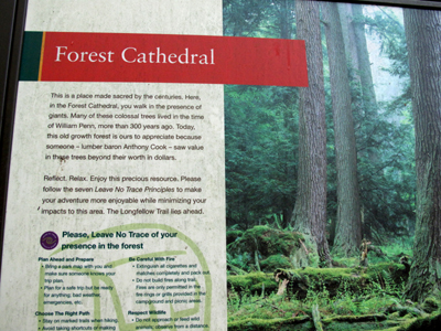 Cook Forest