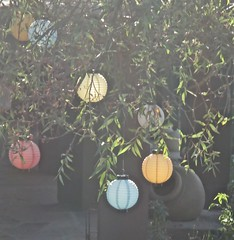 Paper lanterns in late afternoon light...