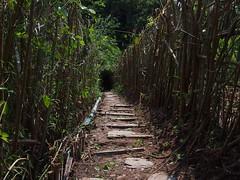 Path to Dyen Sabai, Luang Prabang