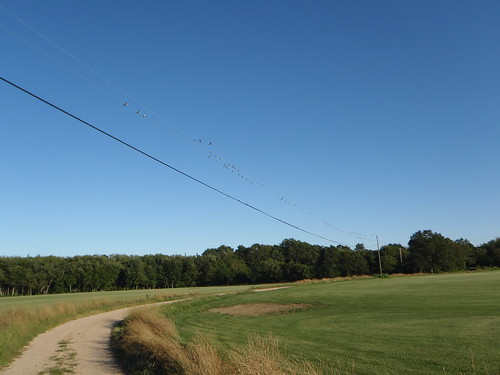 Birds on a telephone line