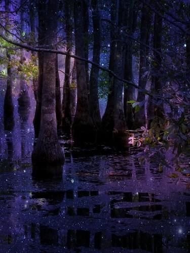 Goodnight on Fairie Swamp Garden