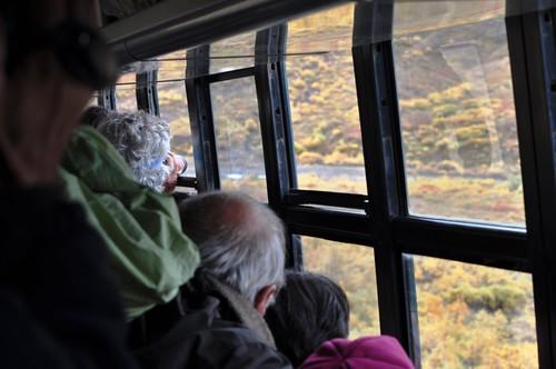 Denali National Park Visitors Photograph a Bear, Aug. 2011