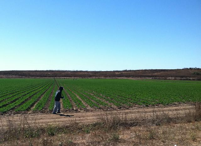 Vineyard 2011 Field Workers.jpg