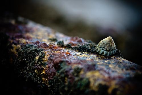 the lonley barnacle by Matt Hovey (on hiatus. back soon!)