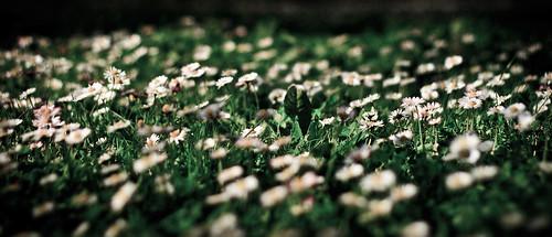 field of little dreams by Matt Hovey (on hiatus. back soon!)