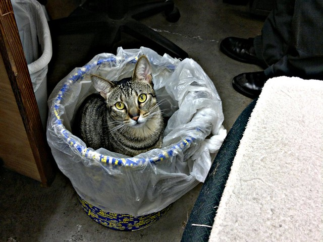 Cat in a Wastebasket