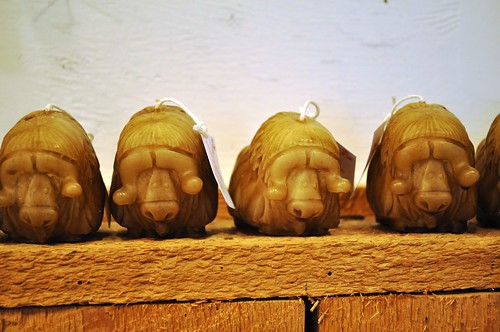 Musk Ox Candles in the Gift Shop - Too Cute!
