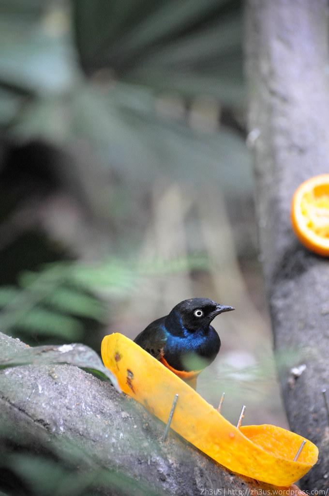 Jurong Birdpark (59 of 89)