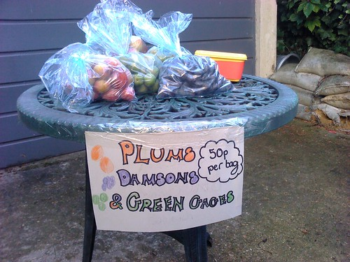 Plums, Damsons and Greengages for sale
