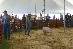 Eric showing pigs.jpg