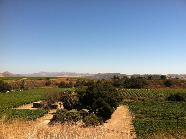 Vineyard 2011 Paradise 2.jpg