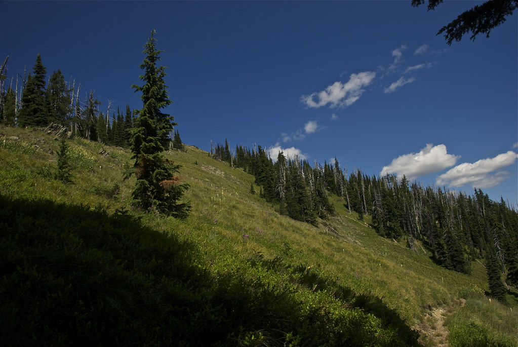 Trail 528