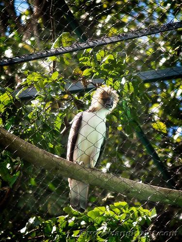 Philippine Eagle Center, Davao