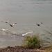 Birds Off the Shell Beach Coast 6