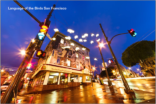Language of the Birds San Francisco by davidyuweb