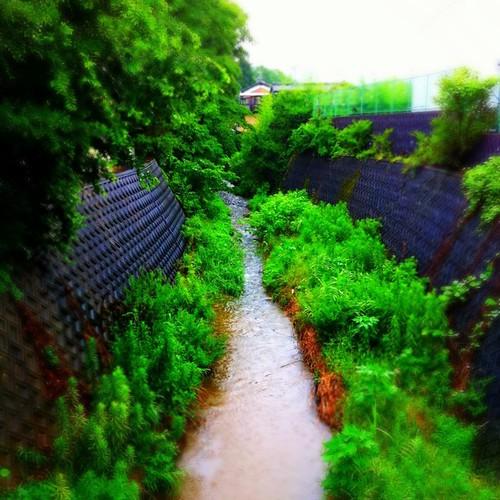 雨の日は、ちと憂鬱。#iphonography #instagram