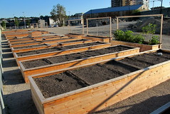 Olympic Village Community Garden