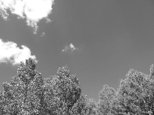 aspens + sky