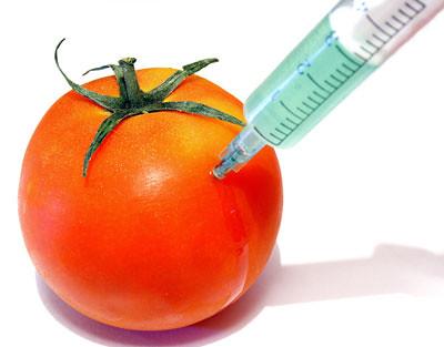 productos transgénicos