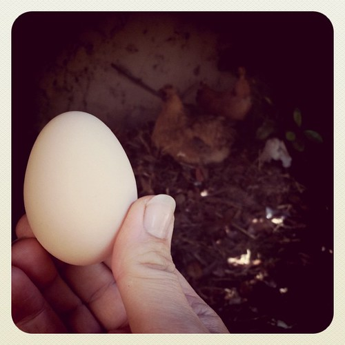 Look what I found in the compost heap a few minutes ago!  Mama laid an egg!