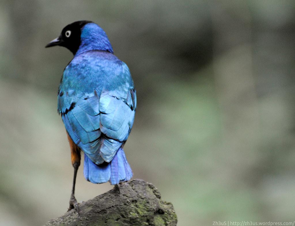 Jurong Birdpark (60 of 89)