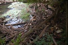 River Flotsam