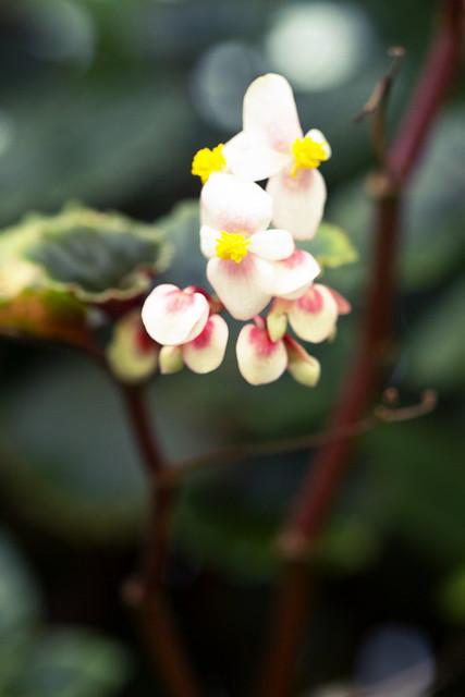 Visit to Botonical Garden 01