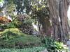 Taman Sendangsono