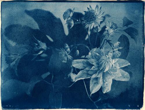 cyanotype study