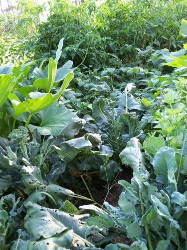 august plants 2