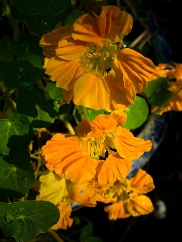 Flowers in a shaded garden look magical
