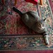My Rug, September 07, 2011
