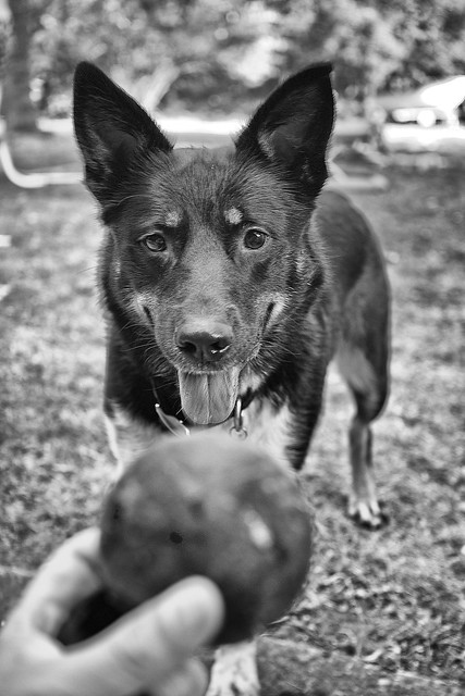 Throw the ball