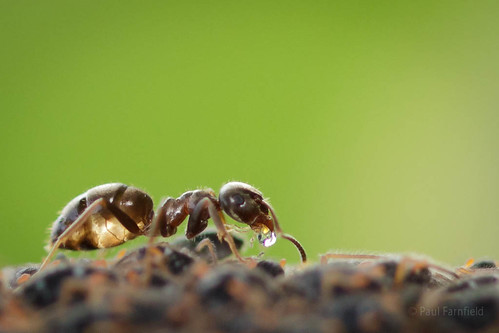 Ants and Aphids by ShaftInAction