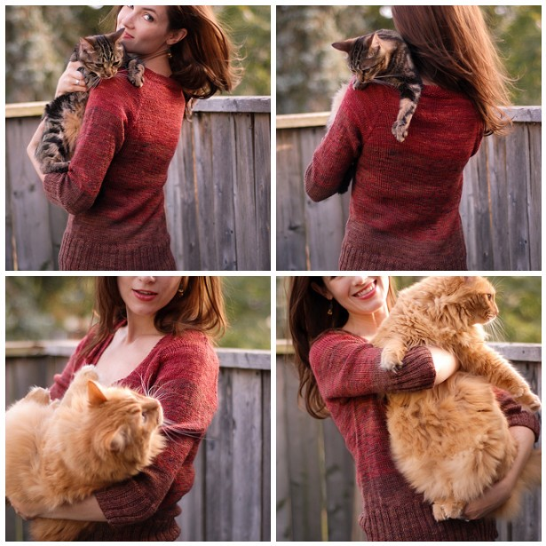 Ombre Cardigan, with cats