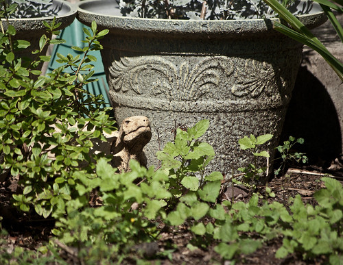 my tortoise sculpture peeking out