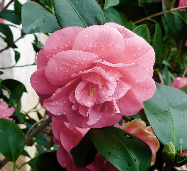 Healthy Pink Flower